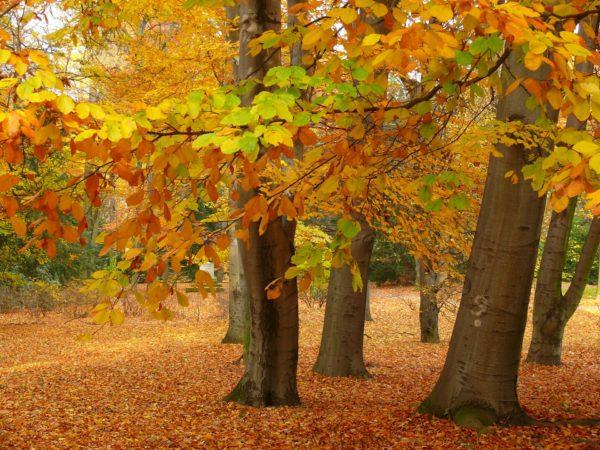 Animal Tree Wald des Erinnerns Tierbestattung