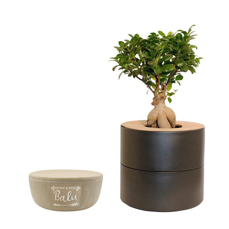 Keramik mit Bio-Urne_anthrazit_ohne Fähnchen