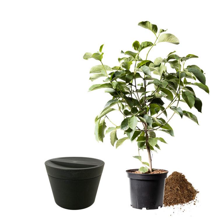 anthrazit Urne mit Baum_frei